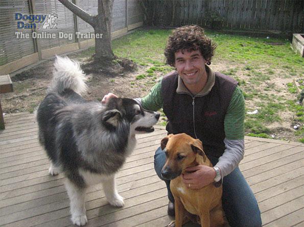 Dan-2-dogs